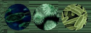 Bioburden image